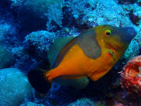 Turks- und Caicosinseln: Lots of Caribbean Fish!
