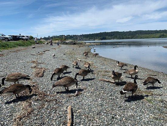 Esquimalt Lagoon Migratory Bird Sanctuary: 새