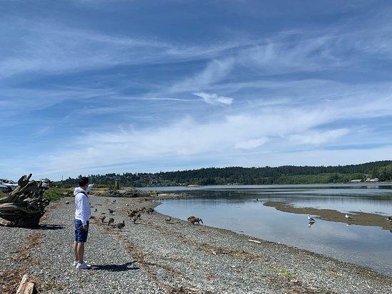 Esquimalt Lagoon Migratory Bird Sanctuary: 풍경