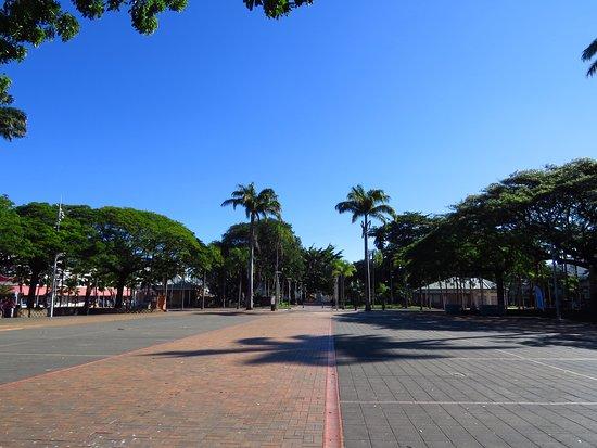 Coconut Palm Square