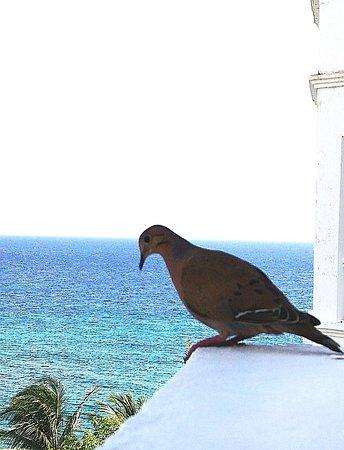 Bahia Principe Grand Jamaica: Dove