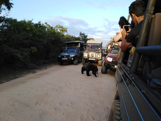 Yala National Park, Srí Lanka: Yala Safari found a Bear - Sri Lanka