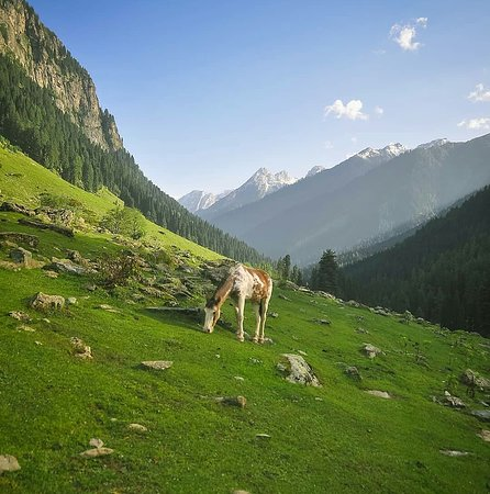Jammu og Kashmir, India: Nature is a storehouse of joy and pleasure. It is an everflowing fountain of divine beauty. These beauties please us not only at the moment of seeing but they continue to thrill us even afterwards.