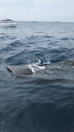 Amazing experience with Whalesharks