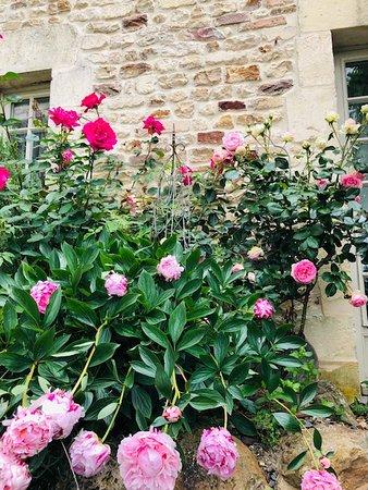 Barbery, Frankrig: Les roses et les pivoines