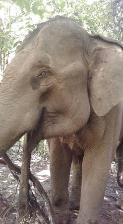 6days/5nights Volunteering Kindred Spirit Elephant Sanctuary Chiang Mai: So happy and free.