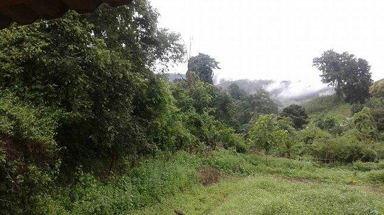 6days/5nights Volunteering Kindred Spirit Elephant Sanctuary Chiang Mai: So amazing!
