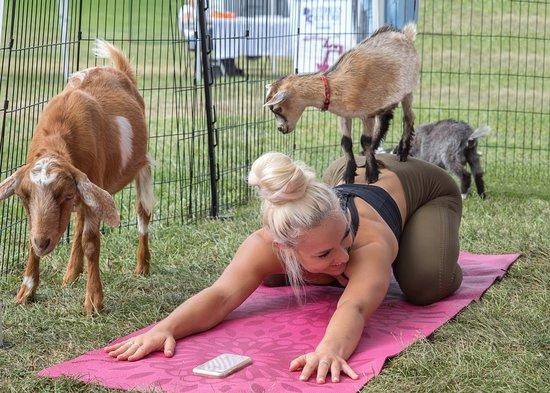 Fox Den Goat Yoga
