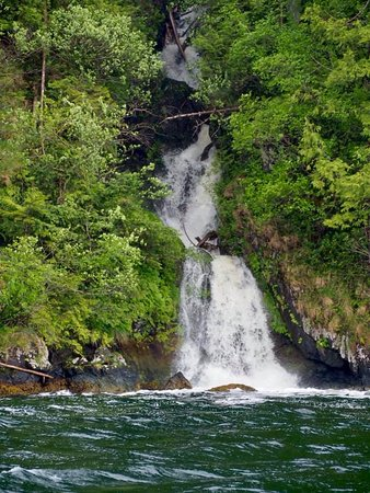 Moresby Island, Canada: Waterfalls pour into the ocean and are visible from the boat on excursions.