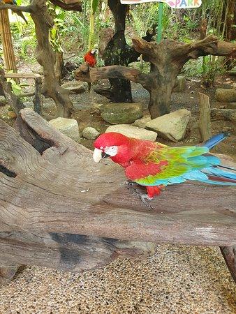 Colourful Bird-life on Show and Enjoying it @ Phuket Bird Park