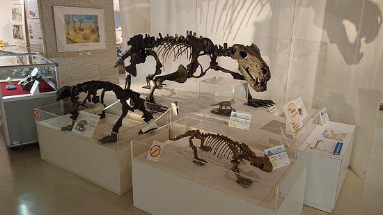 恐竜の復元模型