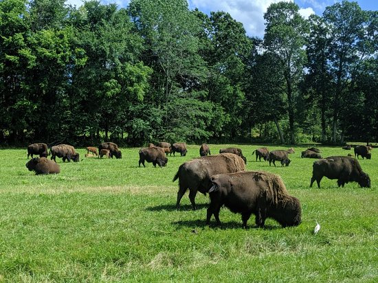 The Elk and Bison Prairie