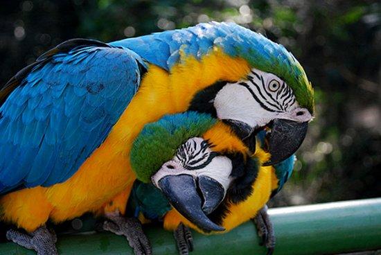 Trinidad, Bolivia: Las Parabas Barba Azul Viven !!!