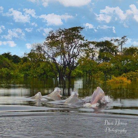 Puerto Carreno, كولومبيا: Avistamiento de Delfines Rosados 🐬,  verlos salir a solo cm de ti es una experiencia mágica, recomendada para todos los amantes de la naturaleza 🌎