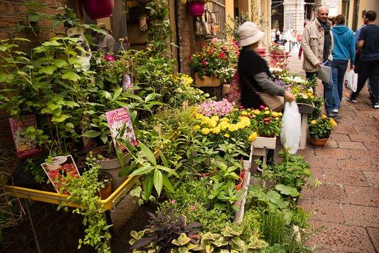 Bologna Street Food Tour: Taste like locals: Flower market