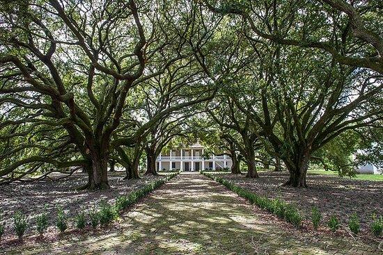 Tour della piantagione di Whitney