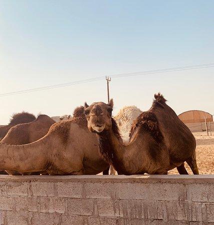 Abu Dhabi: 7-Hours Desert Safari with BBQ, Camel Ride & Sandboarding – fotografija