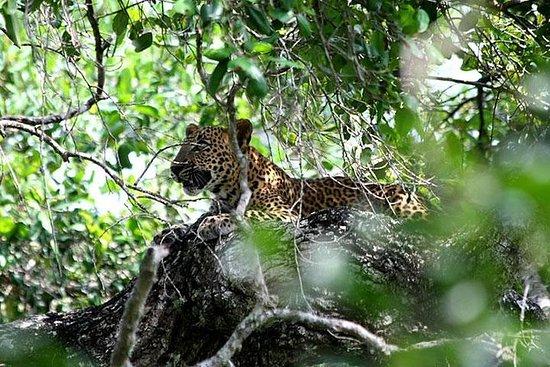 Yala National Park Morgen safari...