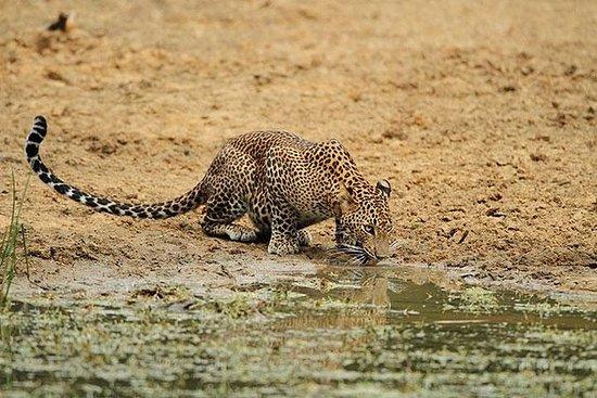 Wilpattu National Park Morgen Safari...