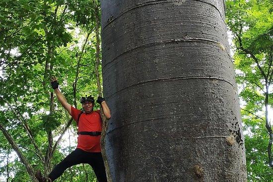 Sykkeltur: Bosque de los Gigantes...