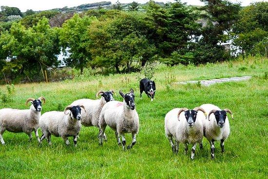 Corbally Catholic parish? - County Sligo Forum - TripAdvisor