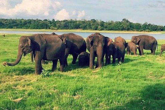 Yala, Udawalawe safari turer
