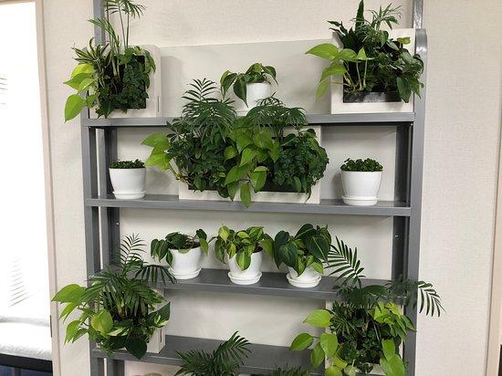 院内の植物棚 生きた観葉植物を数多く飾っております。