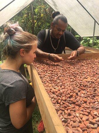 St. Ann's, Trinidad: Drying the nibs