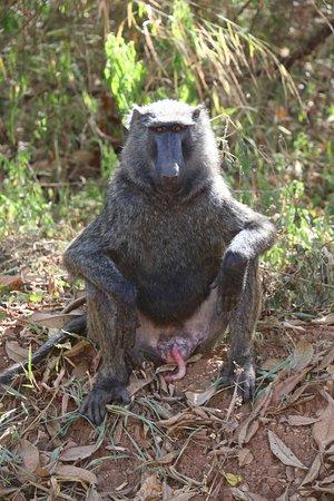 Ntoroko, ยูกันดา: SUR LA ROUTE DU LAKE ALBERT Sur la route de l'Ouganda profond entre le Murchison National Park et le parc Queen Elisabeth n'hésitez pas à faire une halte sur le Lac Albert , pour apprécier les pêcheurs de nuit ! https://youtu.be/U-0wR38x-1o VOTRE PROGRAMME PERSONNALISE  DE VISITE  DE L'OUGANDA SUR DEMANDE AUTOURDUMONDE2023@GMAIL.COM  LES COORDONNES DE NOTRE CHAUFFEUR GUIDE PAUL  SUR DEMANDE SUIVEZ NOUS SUR FACEBOOK @PHILVERH https://www.facebook.com/philverh/?modal=admin_todo_tour