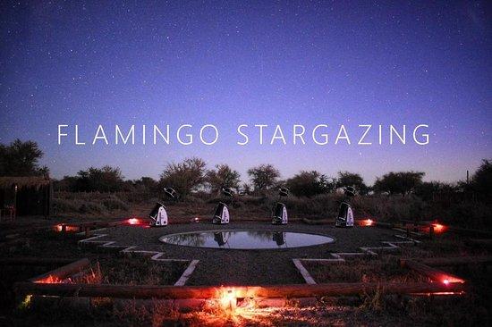 Flamingo Stargazing
