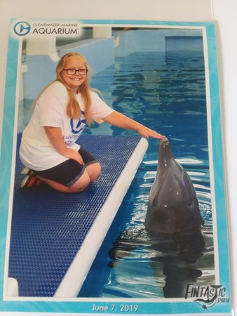 Clearwater Marine Aquarium - 2019 All You Need to Know BEFORE You Go on
