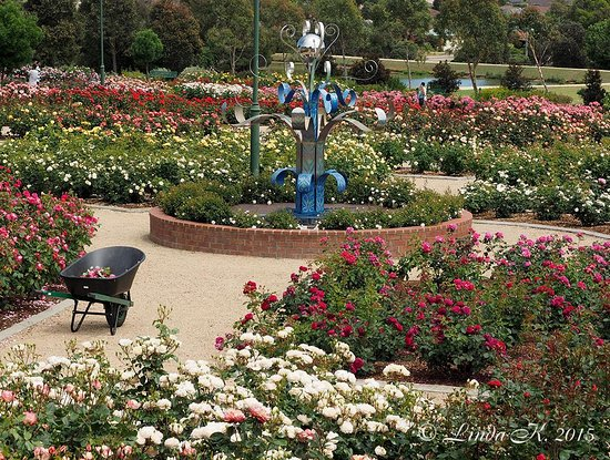 Mornington Botanical Rose Gardens