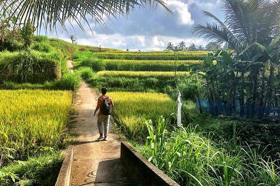 Bilde fra Ubud Rice Field Trekking