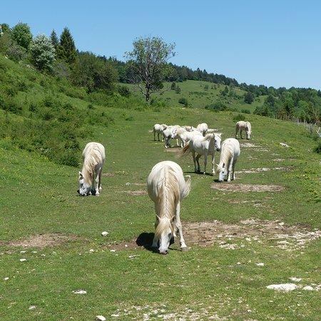 les chevaux sur le parcours
