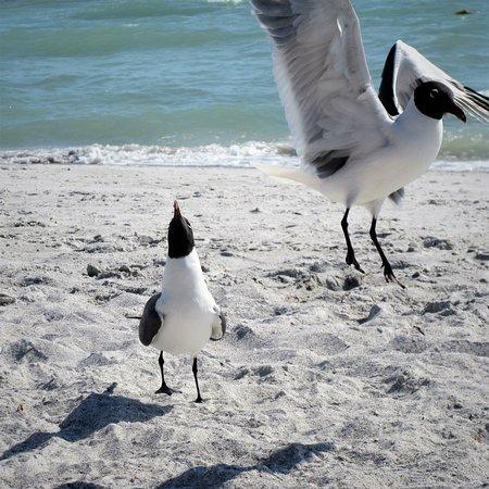 Dancing on the Upham Beach