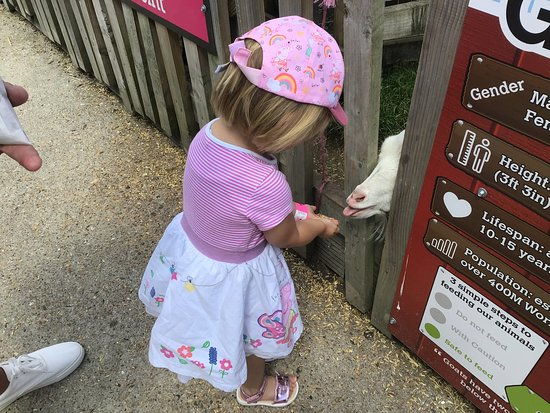 Skip the Line: Old MacDonald's Farm Admission Ticket: Feeding the greedy goats