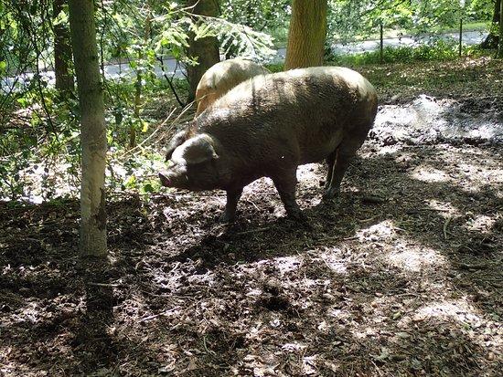 Denby Dale, UK: Ready for a tree rub!