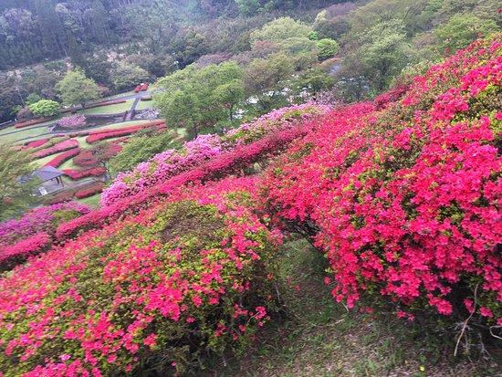 Taman Shiibae