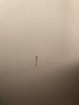 one of many bloody marks on the walls and ceiling