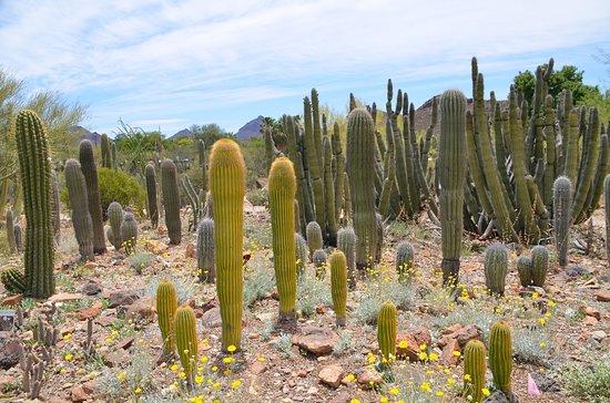 免排隊:一般入場亞利桑那州-索諾拉沙漠博物館門票照片