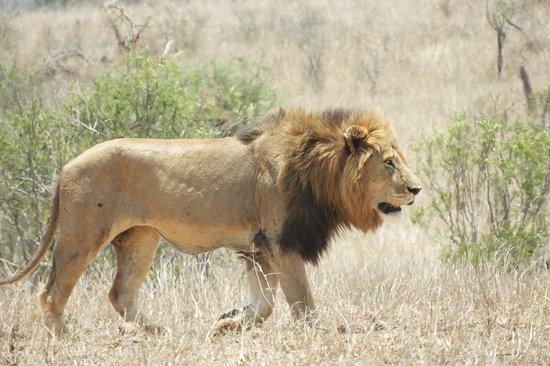 Bongan Safaris