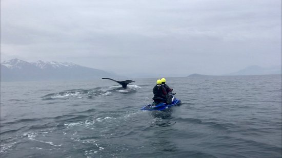 Olafsfjordur, Islândia: Hvalur
