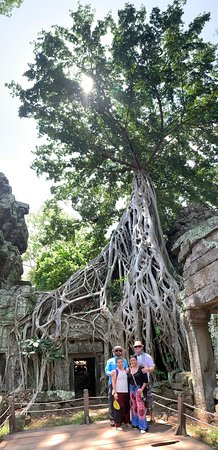 Ultimate Private Angkor Guide To Sunrise Angkor Wat, Bayon, TaProhm, Bantey Srei: Great vertical panoramic capture of the parasitic ficus tree Ta Prohm Temple.