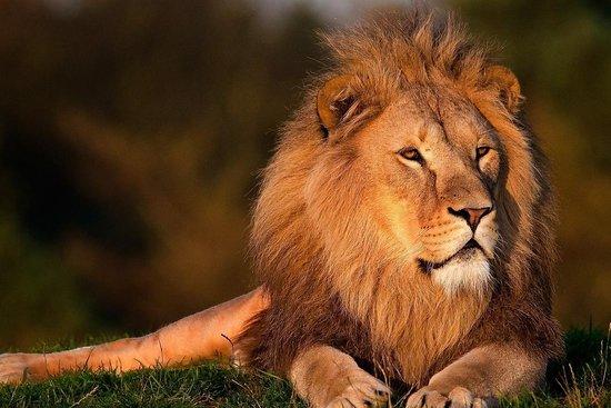 Kruger Park Tours