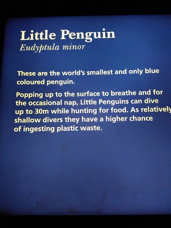 Melbourne Zoo General Entry Ticket: Little Penguin Signboard