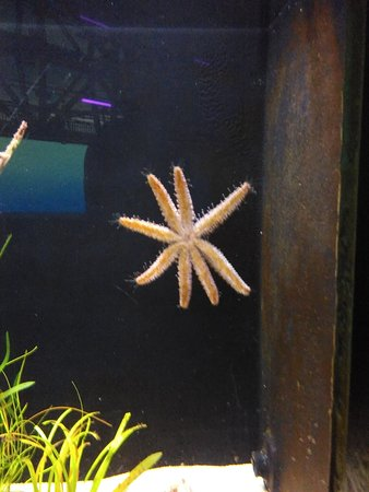 Melbourne Zoo General Entry Ticket: Starfish
