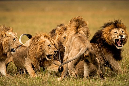 Kenya Safaris and Holidays