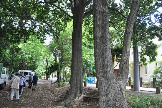 Shimizudera Park
