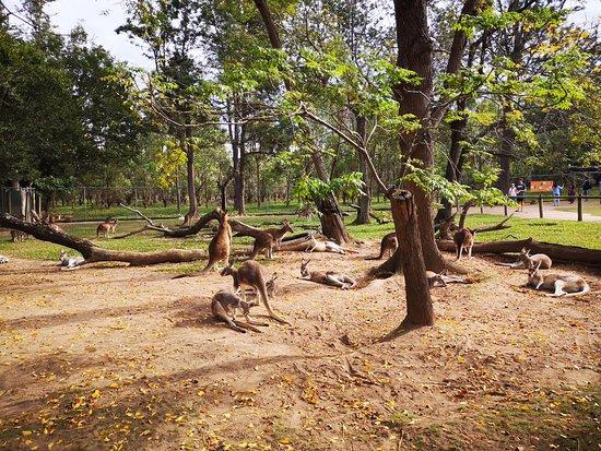 Lone Pine Koala Sanctuary Day Pass: Kangaroo resting area