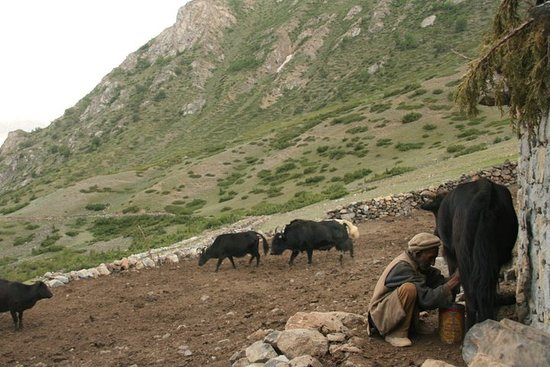 Yak herder's...in a summer shepherd pasture's. they winter down in the valley.at  Wozal Hadar